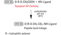 AFC_Carboxy_fig1_coupling.jpg